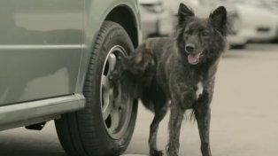 Un clásico de los perros: orinar sobre las ruedas de los autos.