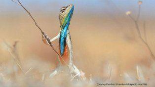 Las curiosas postales finalistas para el premio a la foto más graciosa del reino animal