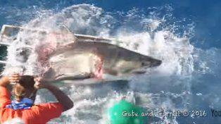 Un tiburón blanco se metió en la jaula donde había un buzo filmando