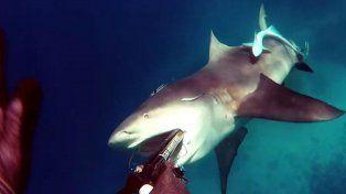Un buzo grabó cómo se salvó del feroz ataque de un tiburón en mar abierto