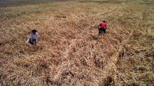 Bajar la mirada: Manejo de suelos