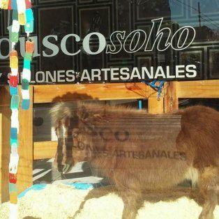 polemica por la exhibicion de un pony en la vidriera de una muebleria