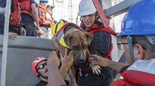 Rescatan a dos mujeres y sus perros tras estar cinco meses a la deriva en el Pacífico
