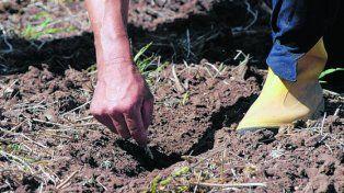 foco. Los mercados observan con atención el avance de la siembra en Sudamérica.