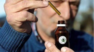 Las gotas de extracto de cannabis comenzaron a ser usadas en Estados Unidos en animales y personas.