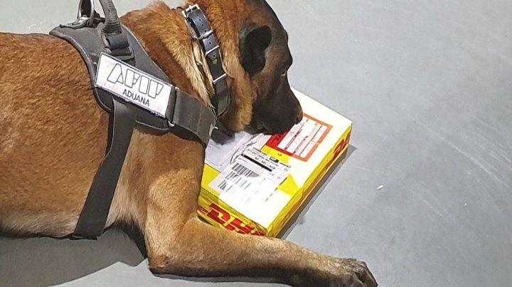 Perros. Las drogas fueron detectadas por canes adiestrados.