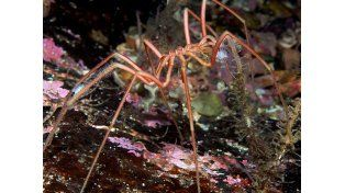 Arañas gigantes desconciertan a los científicos