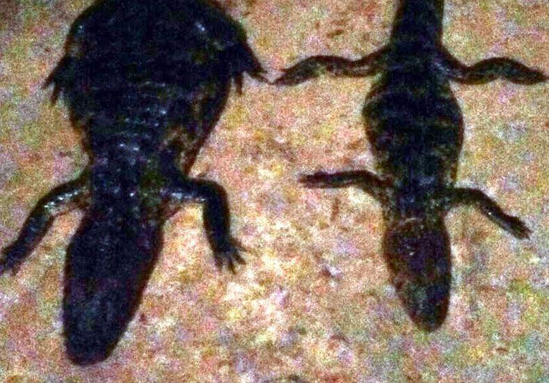 Incautaron dos yacarés a cazadores en la zona de islas en Cayastá