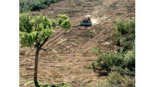 Para Greenpeace, la causa de la inundación es la deforestación