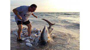 Un hombre salvó a un tiburón que resultó atrapado en una red de pesca en Hollywood. Cortesia Amanda Skeets