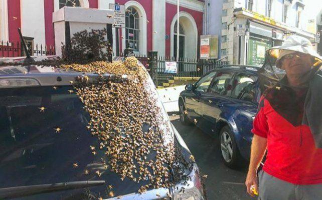 Una abeja reina quedó atrapada en un auto y atrajo 20.000 abejas