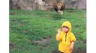 Un león atacó a un nene en un zoológico y fue filmado por turistas en Japón