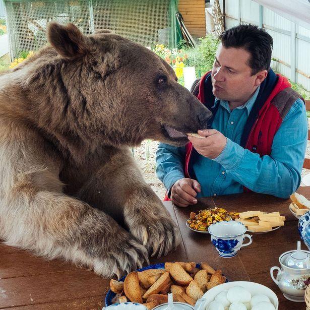 Ni perros ni gatos: ellos tienen un oso como mascota