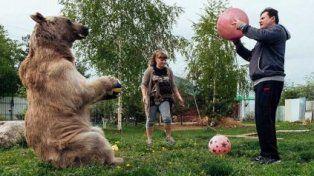 La increíble historia del oso que come con su familia y mira TV en el sofá