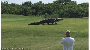 Un cocodrilo gigante sorprendió a jugadores de golf en Estados Unidos