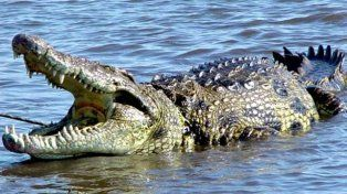 Una mujer no pudo salvar a una amiga del ataque de un cocodrilo