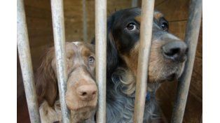 Perros encerrados en una perrera. Foto: Miguel Calvo / El Mundo
