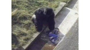 Mataron a un gorila en un Zoo para proteger a un niño