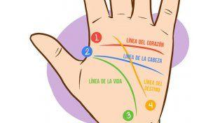 ¿Qué revela tu palma de ti?