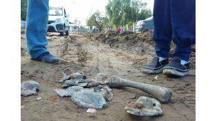 Laboratorios forenses analizarán los huesos volcados en Alto Verde