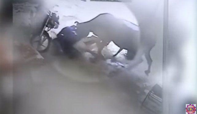 Video: Vaca defiende a mujer de su agresor