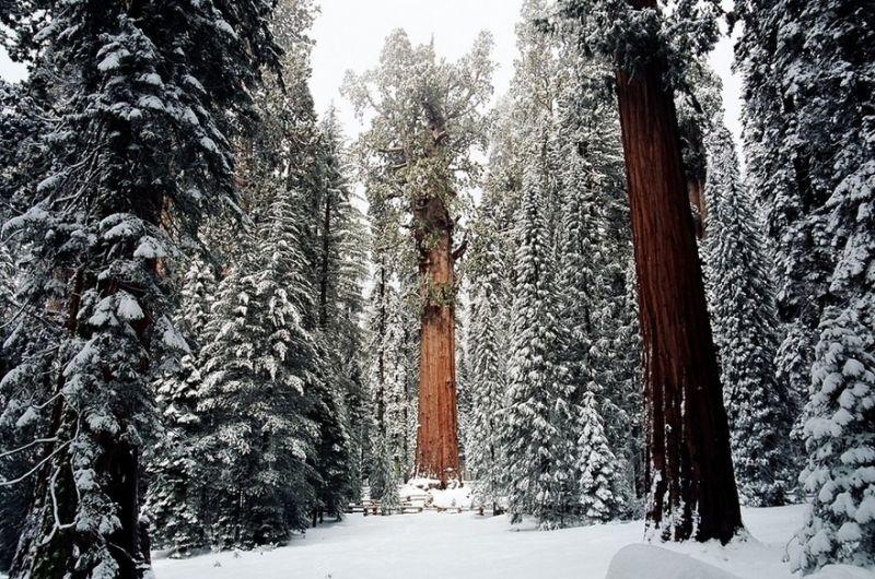 Cómo fotografiaron uno de los árboles más grandes del mundo