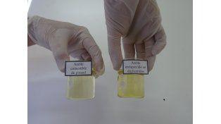 Investigadores santafesinos desarrollaron un aceite único en el país