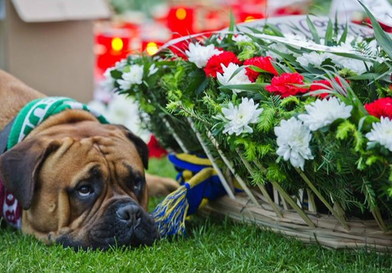 La imagen de un perro triste en el homenaje a un futbolista se vuelve viral