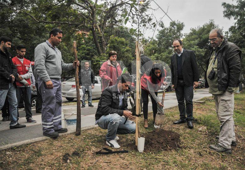 Programa de reconstrucción: presentaron el plan de forestación 2016 para la ciudad