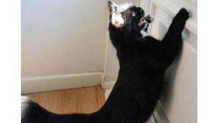 Una gata se convirtió en el terror para los carteros
