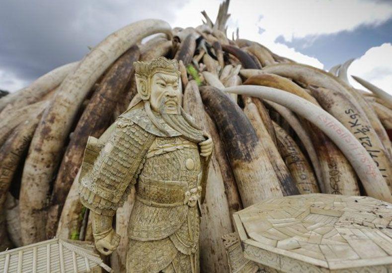 Queman 105 toneladas de marfil para declararle la guerra a la caza furtiva