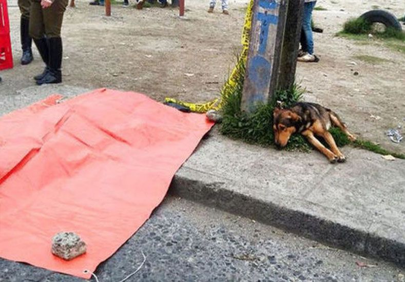 Un perro vela el cadáver de su dueño recién atropellado