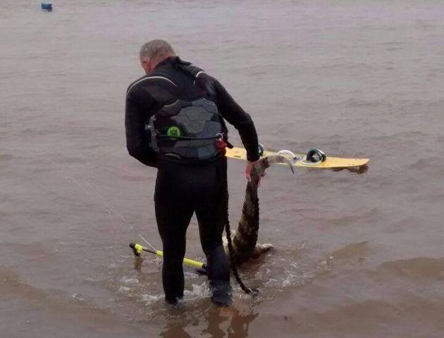 Córdoba halló el yacaré flotando boca arriba en el río y lo arrastró hasta la costa.