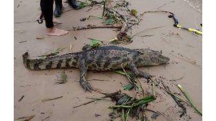 La aparición del animal llamó la atención de los que se encontraban en la playa.