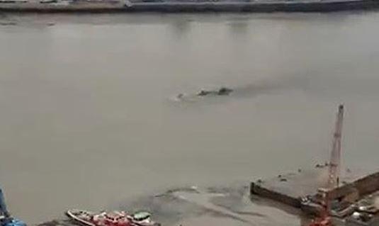 Una serie de bultos extraños fueron filmados por un turista en el río Támesis.