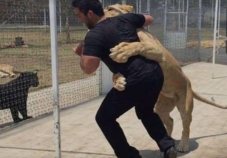 ¡Un fuerte abrazo! Leona se lanza sobre su cuidador
