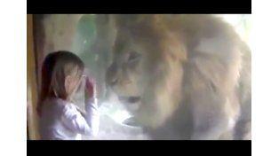Imprevista reacción de un león cuando una nena le quiso dar un beso