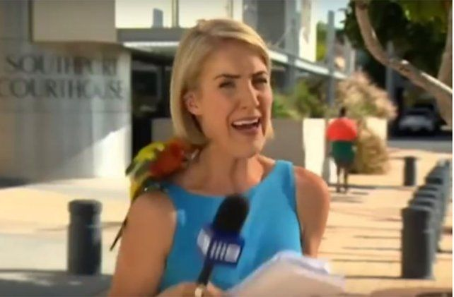 Periodista enloqueció en vivo cuando un loro se posó sobre ella