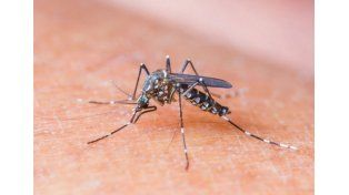 Descubren por qué los mosquitos pican más a unas personas que a otras