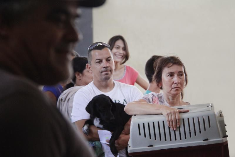 Tenencia responsable de mascotas: jornada especial de castración
