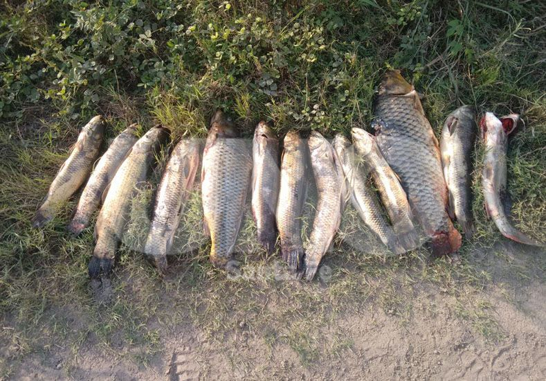 Procedimientos contra la depredación de la fauna autóctona en Santa Fe