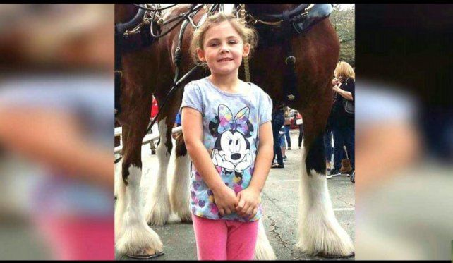 Viral: el caballo posando para la foto