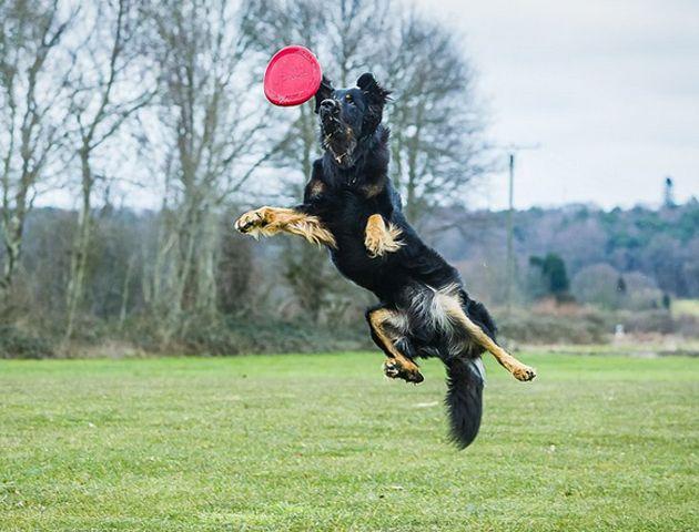 La competición busca al mejor perro y al mejor propietario