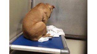 Un perro se deprime porque no lo adoptan y ahora sólo mira una pared