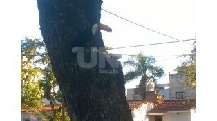 Un tucán en pleno corazón de Bº Guadalupe sorprende y moviliza al vecindario