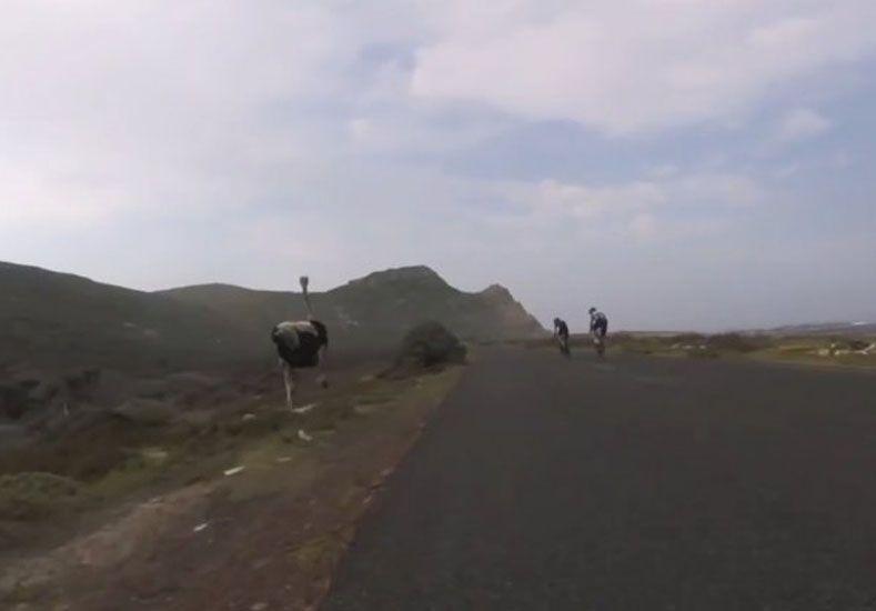 Apareció el correcaminos y corrió una carrera contra ciclistas