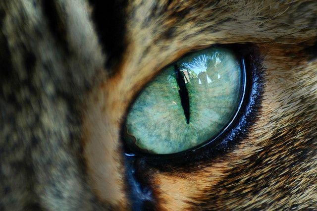 Test: ¿Qué animal se parece más a tu personalidad?