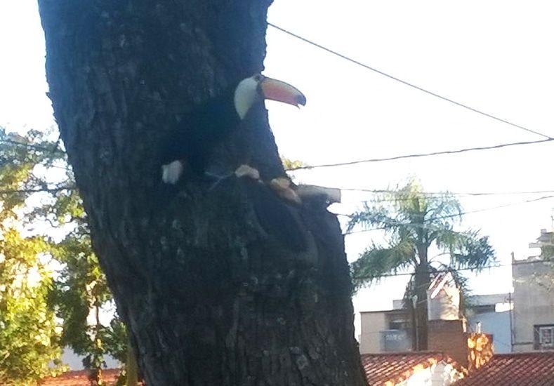 Apareció un tucán en una plaza de barrio Guadalupe