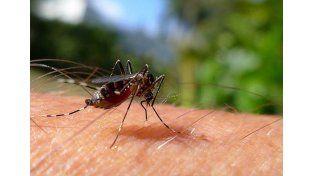 Son 750 los casos acumulados de dengue en la provincia de Santa Fe