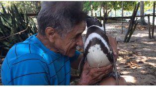 Un pingüino nadó 8.000 kilómetros para encontrarse con el hombre que lo salvó